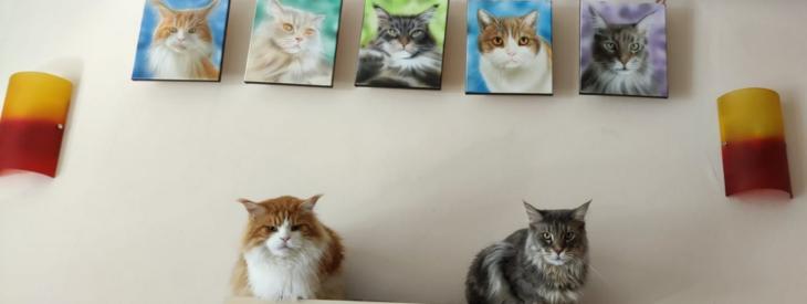 Purrfect Cat Café