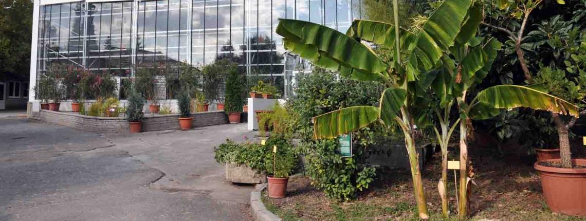 PTE Botanikus kert
