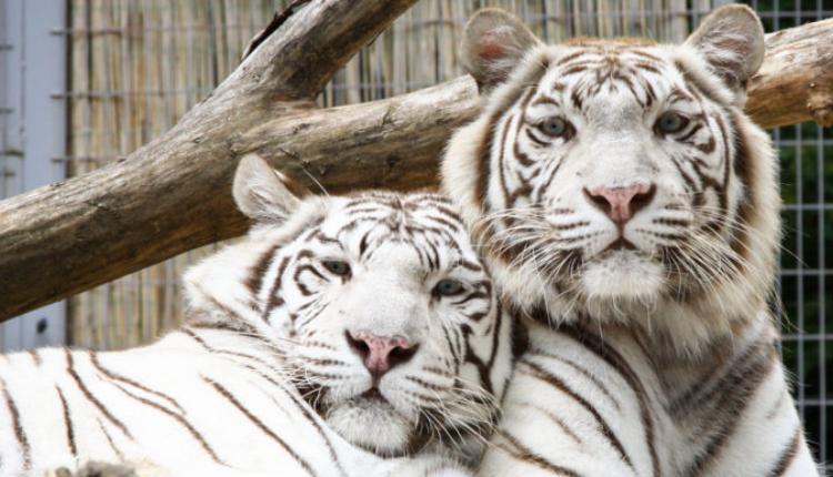 Állatkert Pécs