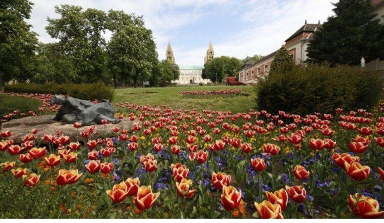 Virágos Pécs