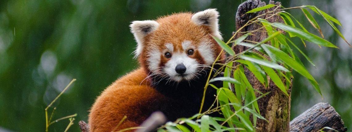 Állatok Világnapja a Pécsi Állatkertben
